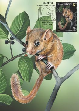 Red Book of the Republic of Belarus. Rodents