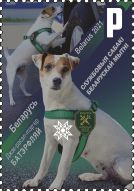 Jack Russell Terrier Buterfly